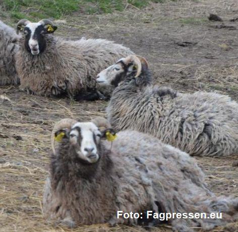 veterinaerpakken-geder-2